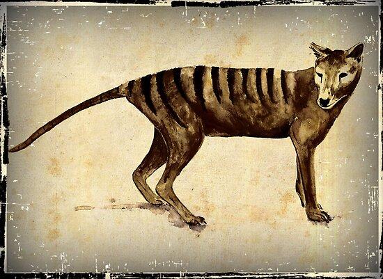 """Tasmanian Tiger (thylacine) "" by Cindy Watkins   Redbubble"