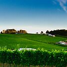 Vineyards by Nathan Waddell