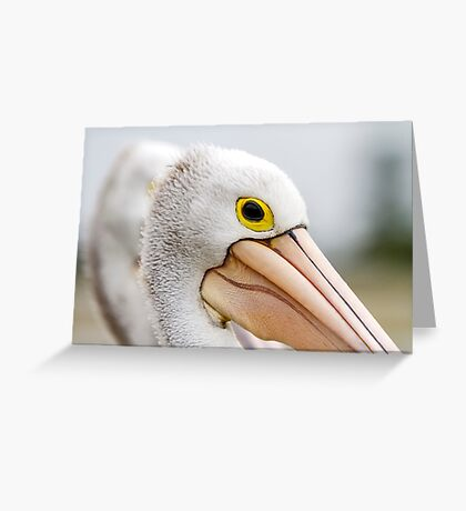 A Pelicans' Gaze Greeting Card