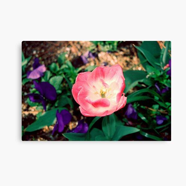 Petal Awakening Canvas Print