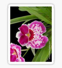 Miltoniopsis Hajime Ono Sticker