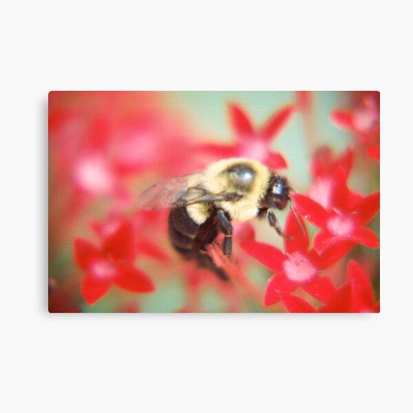 Bumblebee Hard At Work Canvas Print