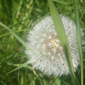 Dandelion in the Grass by RandomGhostie