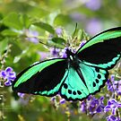 Beautiful butterfly by robmac