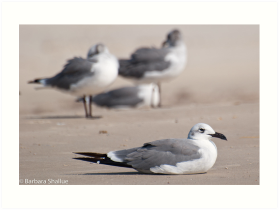 Guard Gull by Barbara Shallue