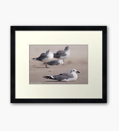 Guard Gull Framed Print