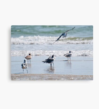 Preparing for Take-Off Canvas Print