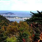 Cabot Trail Vista by Jann Ashworth