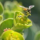 bee in flight color detail shot flowers by Jason Franklin