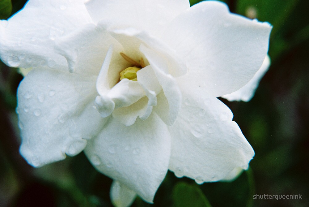 Dew Drops In The Flower Garden by thequeensempire