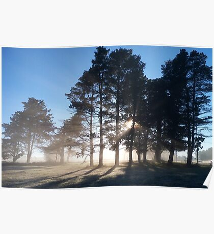 Fog in the pines Poster