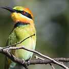 Rainbow Bee-eater by bowenite