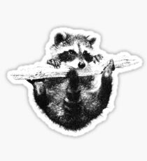 Hanging Raccoon Sticker