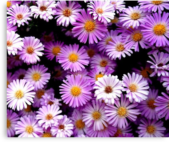 Dizzy Daisy's by Rocksygal52