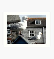 Two Seagulls, Padstow, Cornwall Art Print