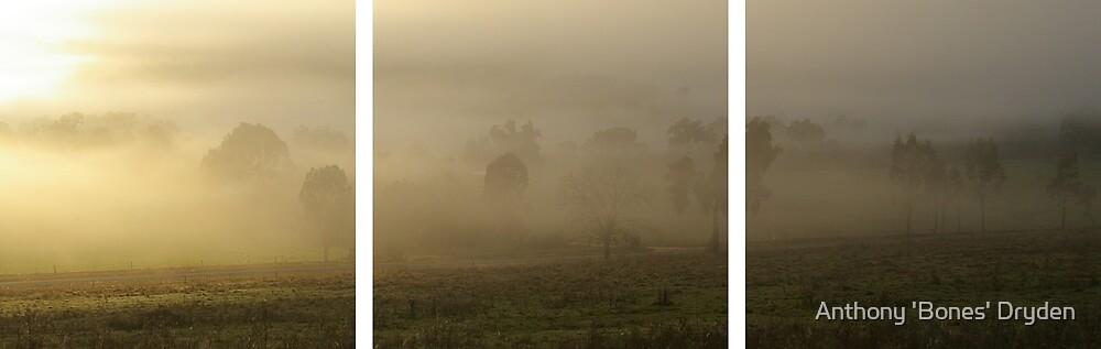 Valley Fog by Anthony 'Bones' Dryden