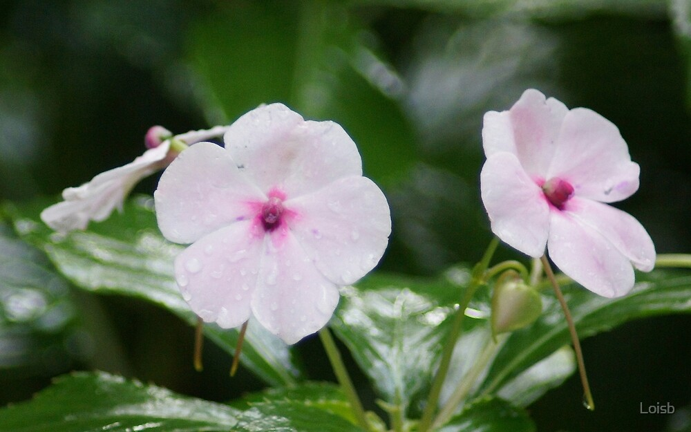 Flowers of Hawaii by Loisb