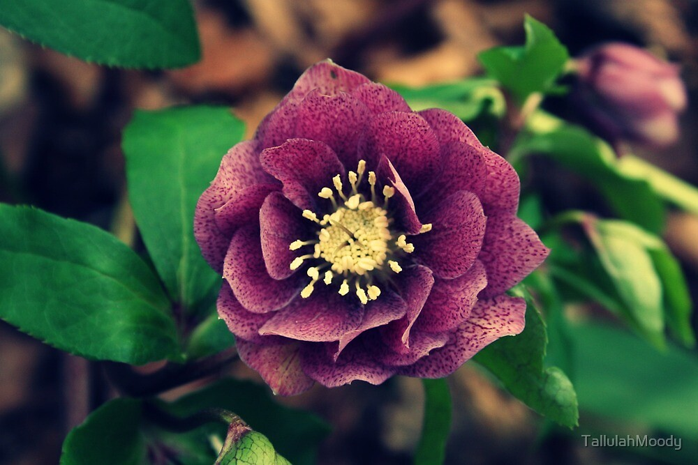 Speckled Flower by TallulahMoody