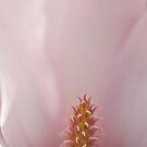 Magnolia by Gisele Bedard