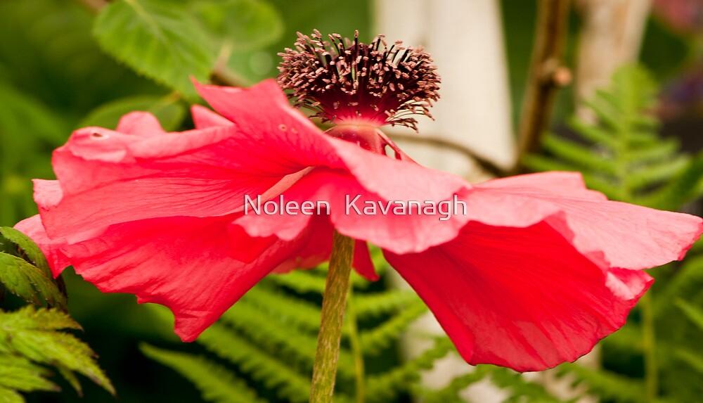 Natures Ballerina! by Noleen  Kavanagh