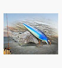 Vintage Fishing Lure - Floyd Roman Nike Blue and White Photographic Print