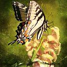 Butterfly by DebbieCHayes