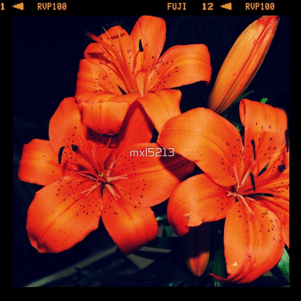 Daylilies by mxl5213