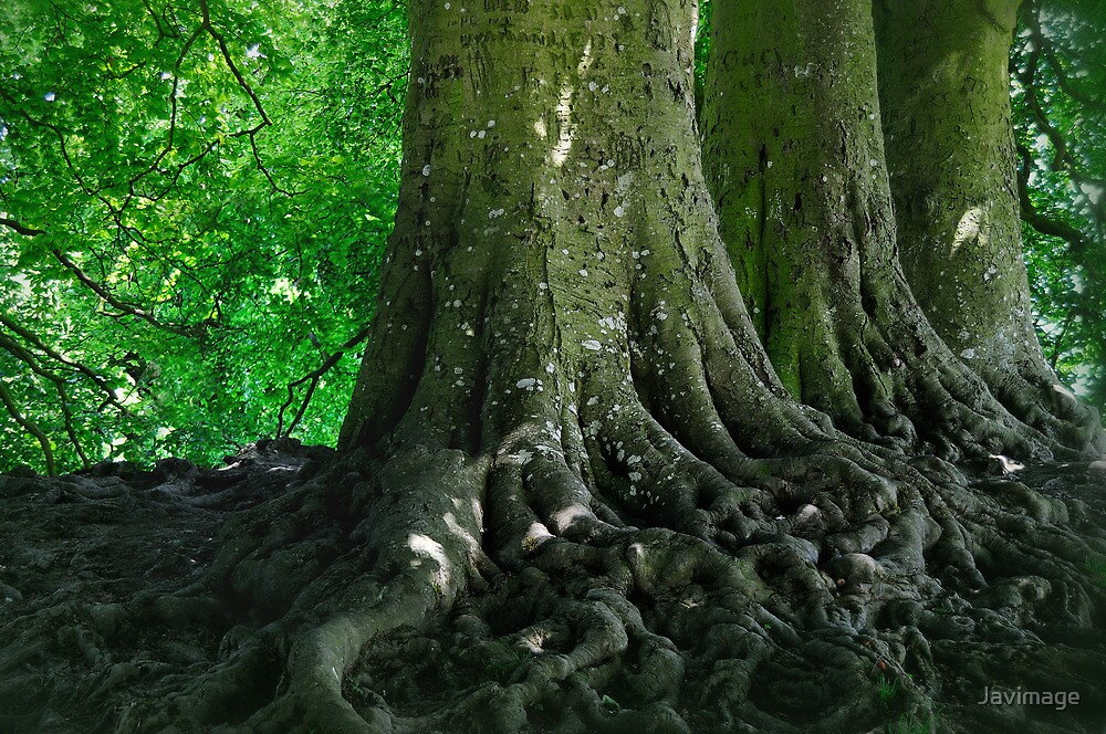 Root of t(h)ree by Javimage