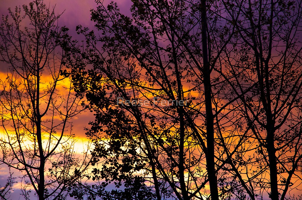 Sunset Colors by Reese Ferrier