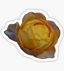 A Sunset-Colored Flower Sticker