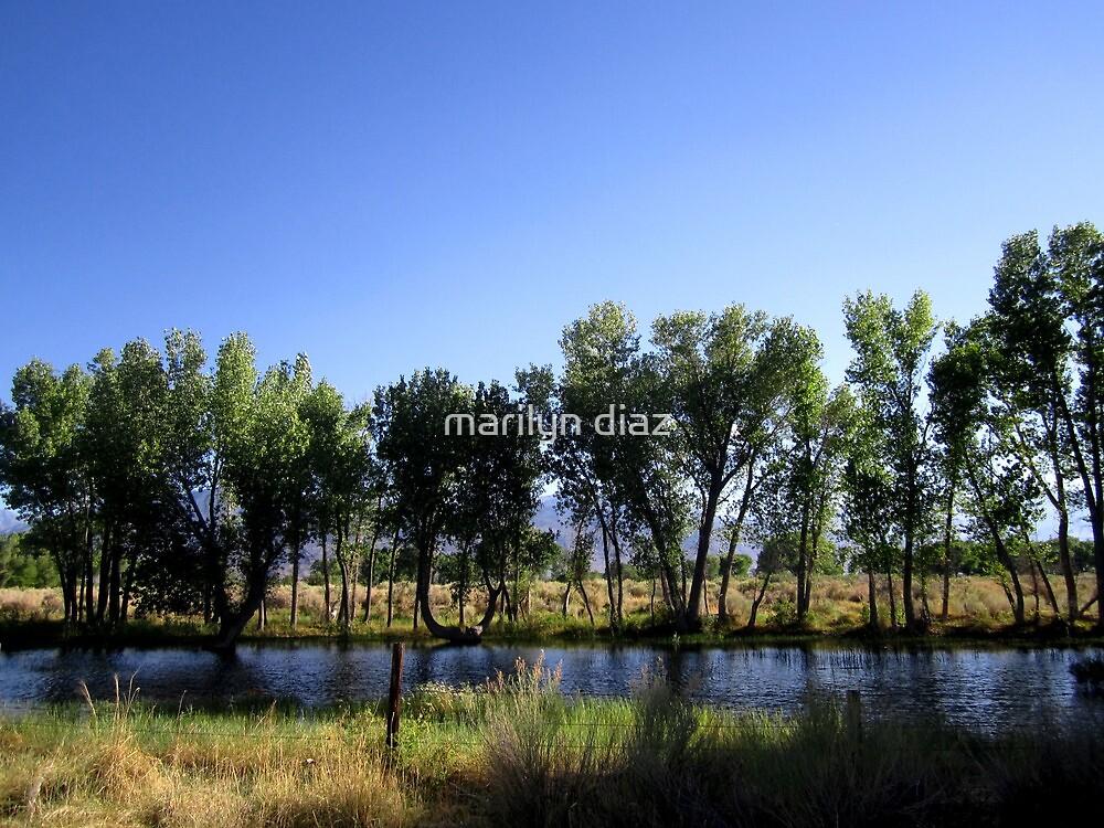 Row Of Trees by marilyn diaz