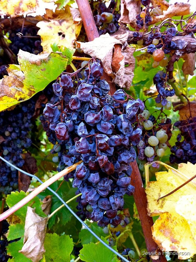 Barossa Grapes by Jessica Henderson