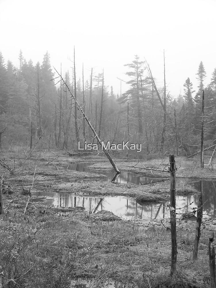 Foggy Swamp by Lisa MacKay