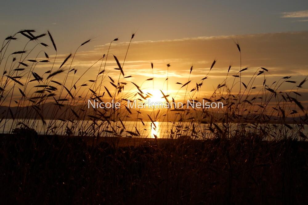 Sunset by Nicole  Markmann Nelson