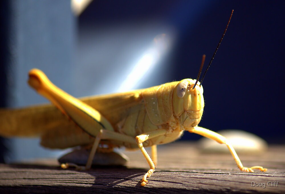 Grasshopper by Doug Cliff