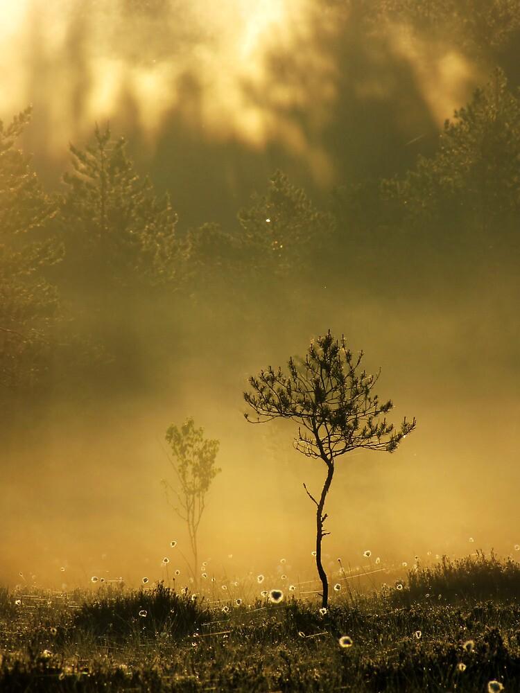 9.6.2012: Summer Morning Magic VII by Petri Volanen