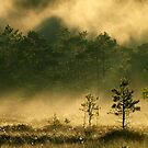 9.6.2012: Summer Morning Magic VIII by Petri Volanen