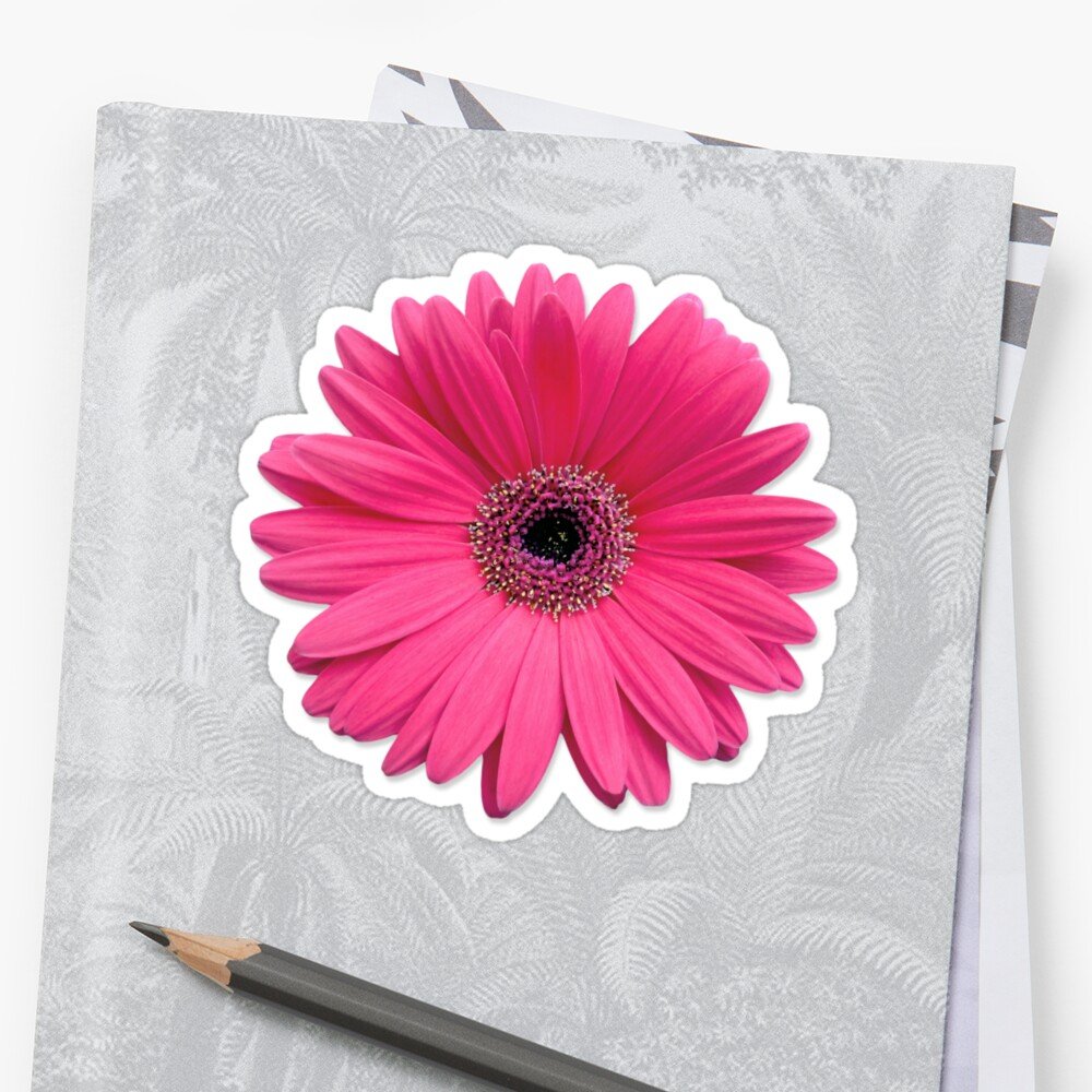 Pink Gerbera Gerber Daisy Flower Stickers Stickers By Wasootch