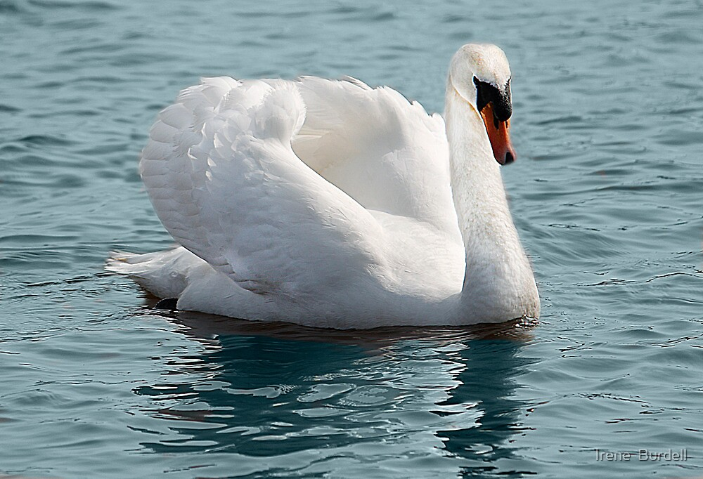 The White Swan by Irene  Burdell