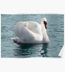 The White Swan Poster