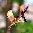 Birds of Flight Three by SB  Sullivan