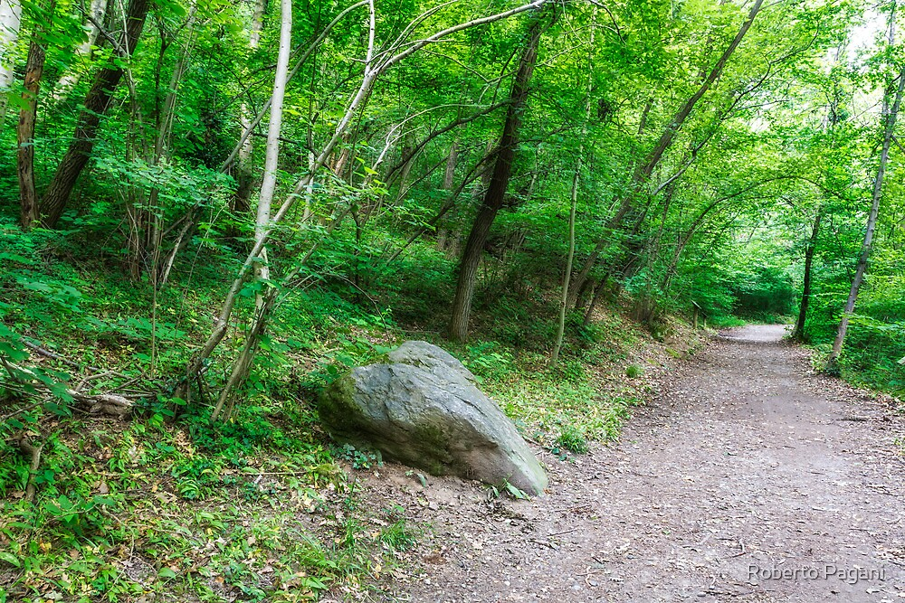 Stone on the path in the wood by Roberto Pagani