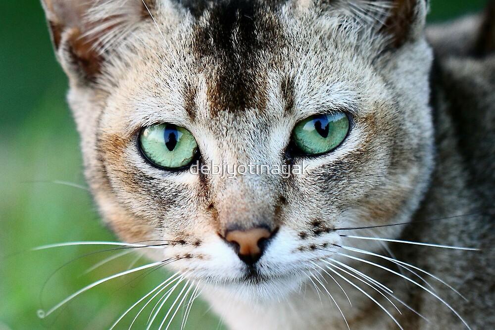 """The stare of the Kitten."" by debjyotinayak"