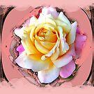 Gentle Rose by Shoshonan