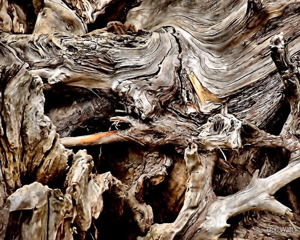Tangleroot by Bob Wall