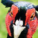 Unpleasant Pheasant! by Laura Kelk