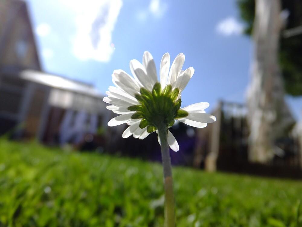 Daisy by missemilyo