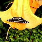 Butterfly on a flower... by missemilyo