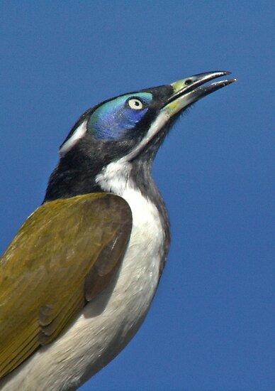 THE BANANA BIRD by myraj