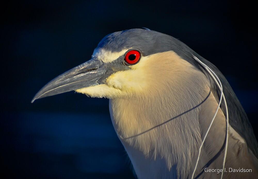 Night Heron by George I. Davidson